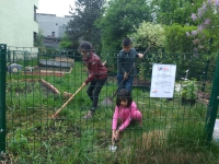 wir pflanzen Ribiselsträucher im Gemeinschaftsgarten