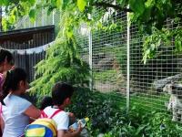 Zoo_16
