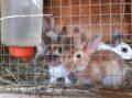 Aufruhr im Kaninchenstall